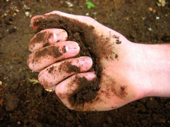 dirt hand